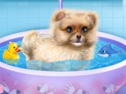 Pomeranian Puppy Day Care